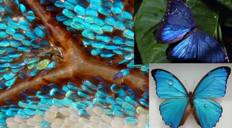 butterfly wings under microscope and with water droplets