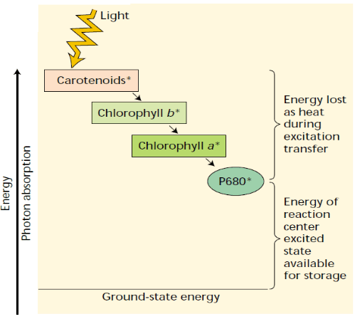 chlorophyll pigments energy consuption scheme