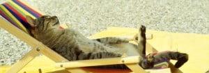 CAT(1)